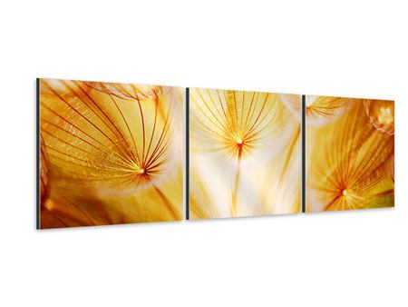 Panorama Aluminiumbild 3-teilig Close Up Pusteblume im Licht