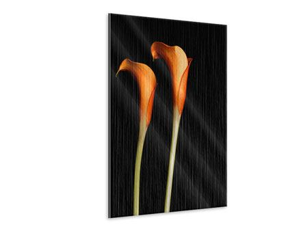 Metallic-Bild Goldige Calla
