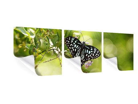 Panorama Poster 3-teilig Papilio Schmetterling XXL