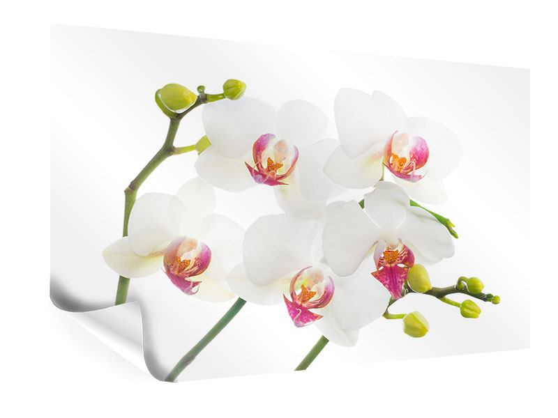 Poster Orchideenliebe